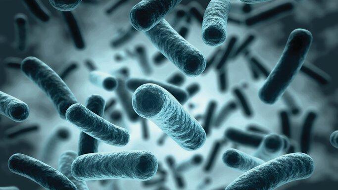 Legionellas under the microscope